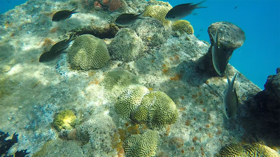 snorkeling and admiring the marine life