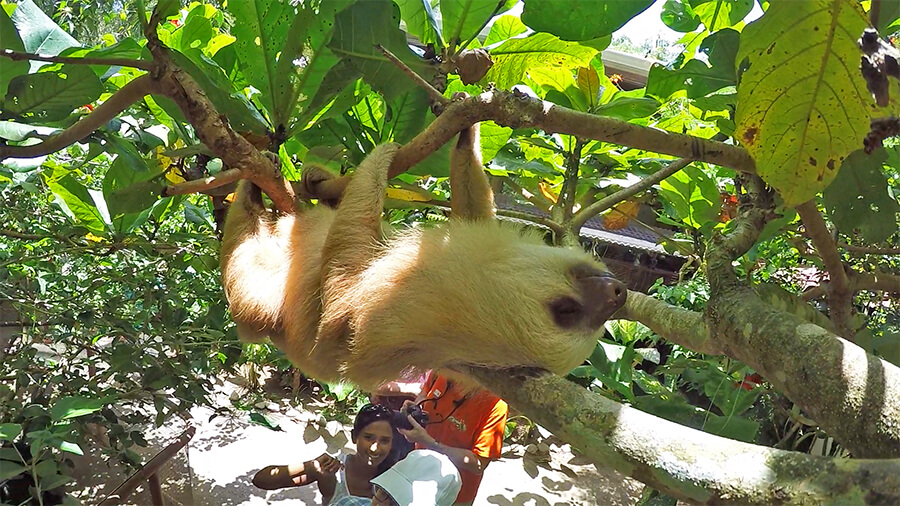 Aviarios del Caribe Sloth Rescue Center